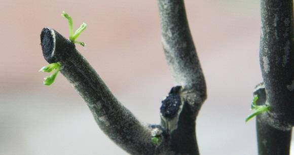Gartenarbeit februar  Gartenarbeit im Februar: Rückschnitt und Kalkanstrich | Gartenpflegen
